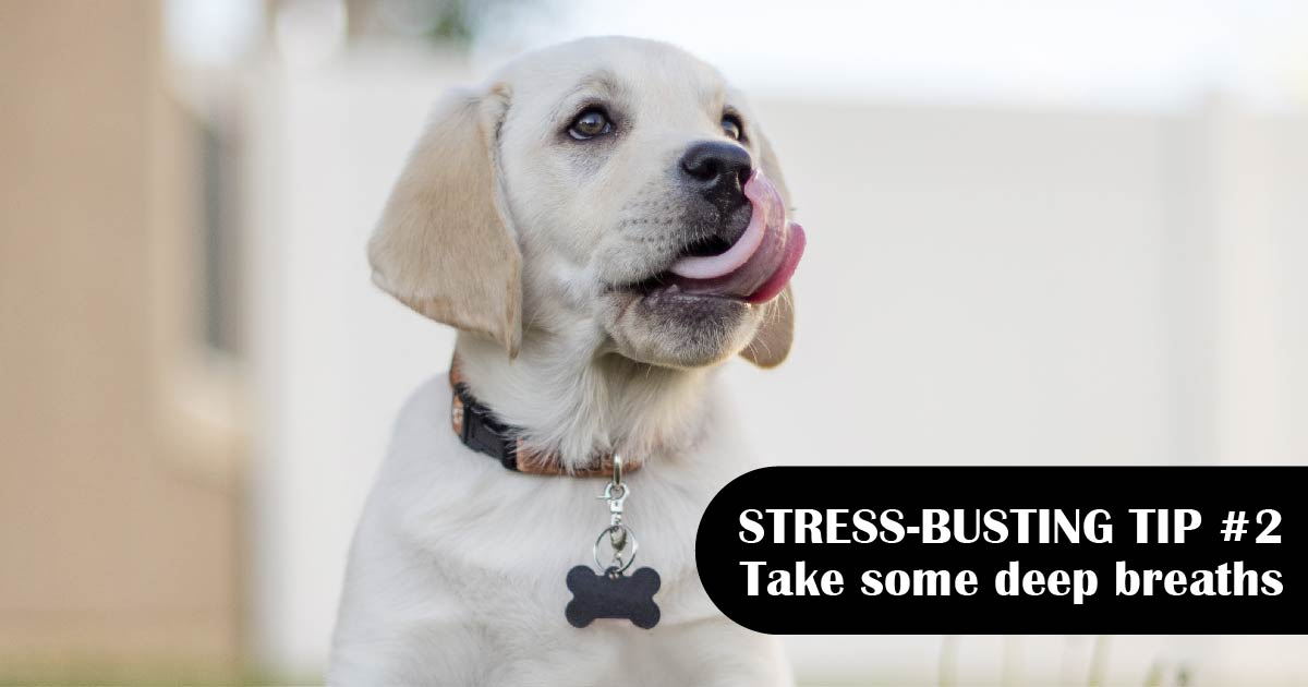 A yellow Lab puppy licks the air. Text reads: Stress-busting tip No. 2: Take some deep breaths.