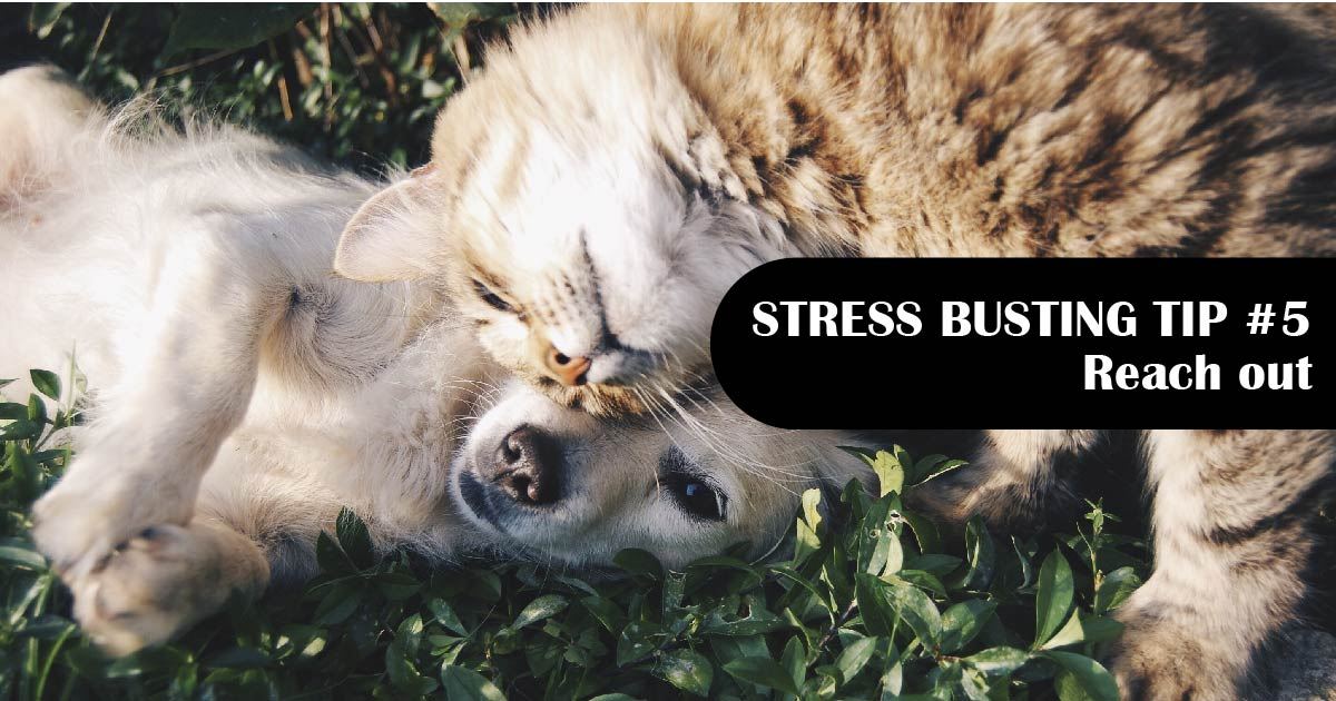 A puppy and kitten cuddle. Text reads: Stress-busting tip No. 5: Reach out.