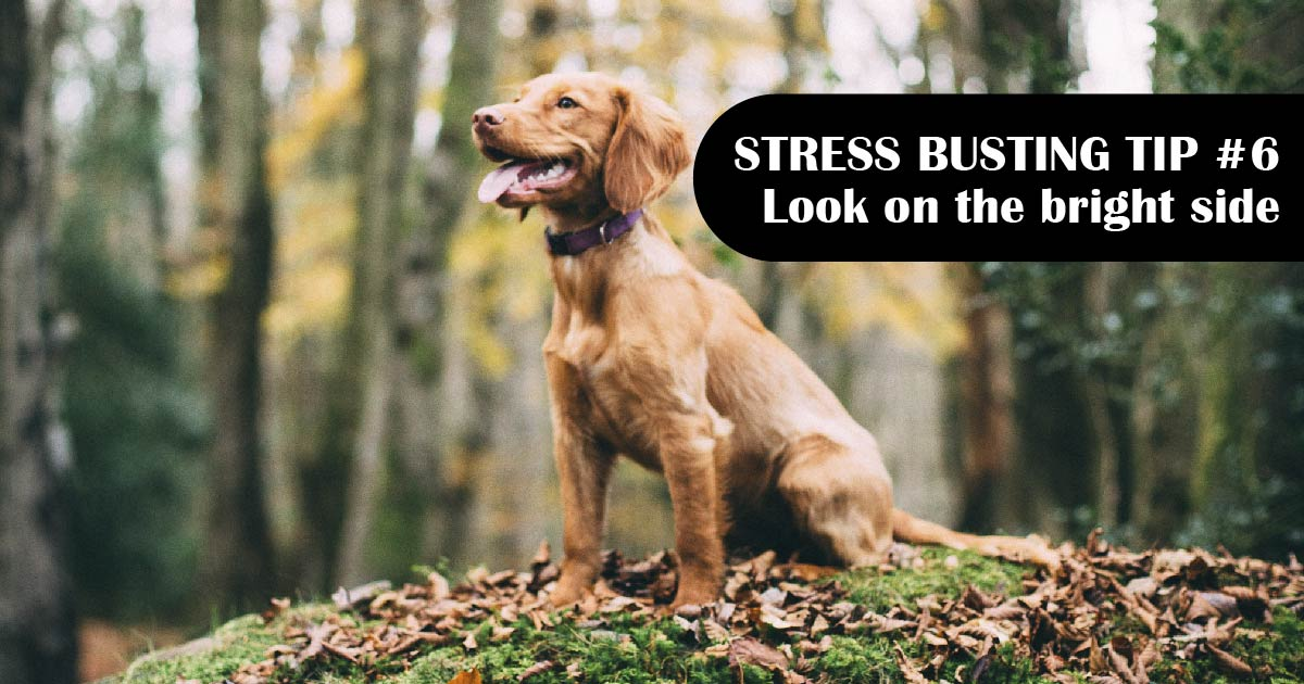 A young golden-colored dog sits in the sun. Text reads: Stress-busting tip No. 6: Look on the bright side.